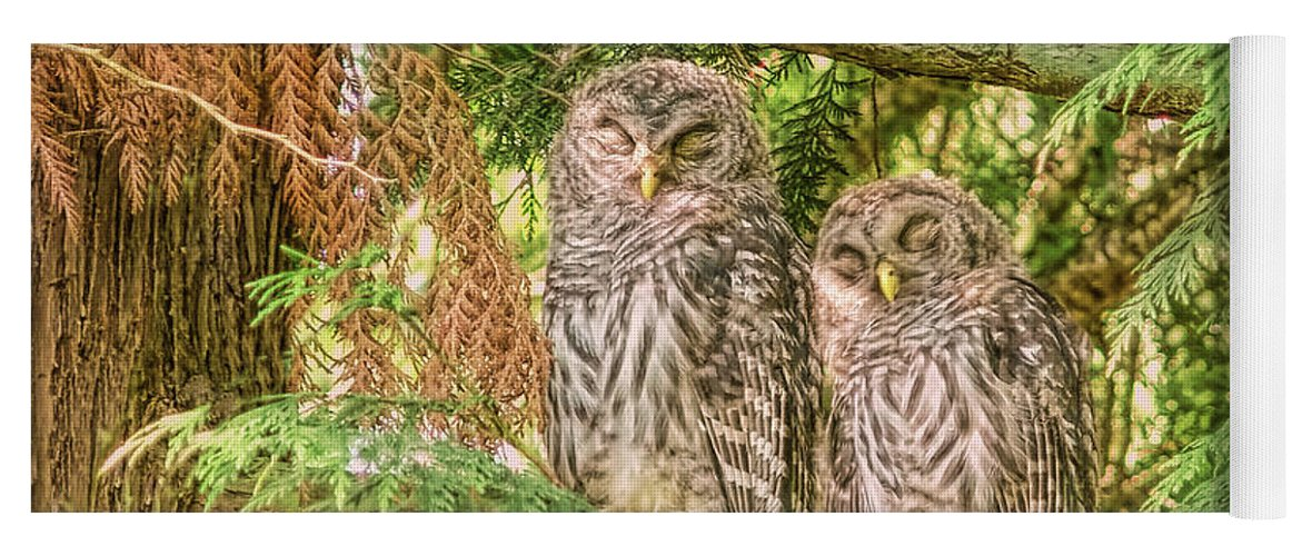 Owl Yoga Mat featuring the photograph Sleeping Barred Owlets by Jennie Marie Schell