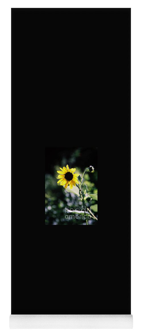 Sunflower Yoga Mat featuring the photograph Summer Sunshine by Kathy McClure