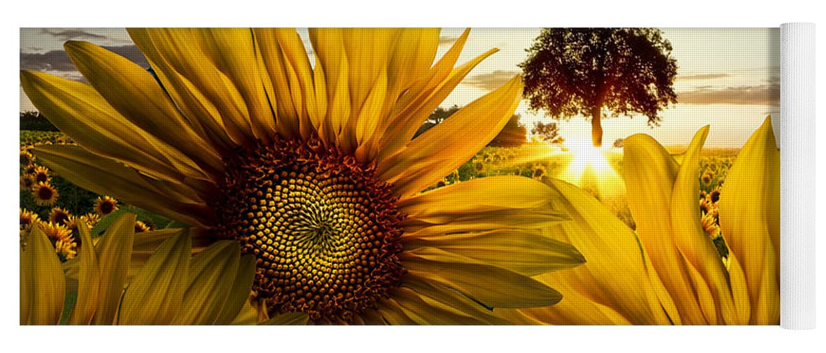 American Yoga Mat featuring the photograph Sunflower Heaven by Debra and Dave Vanderlaan