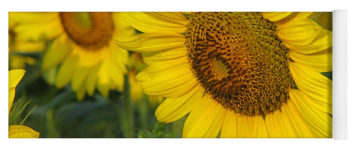 Sunflowers Yoga Mat featuring the photograph Sunflower series by Amanda Barcon