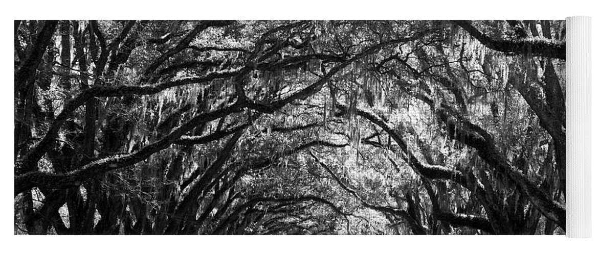 Live Oaks Yoga Mat featuring the photograph Sunny Southern Day - Black and White by Carol Groenen