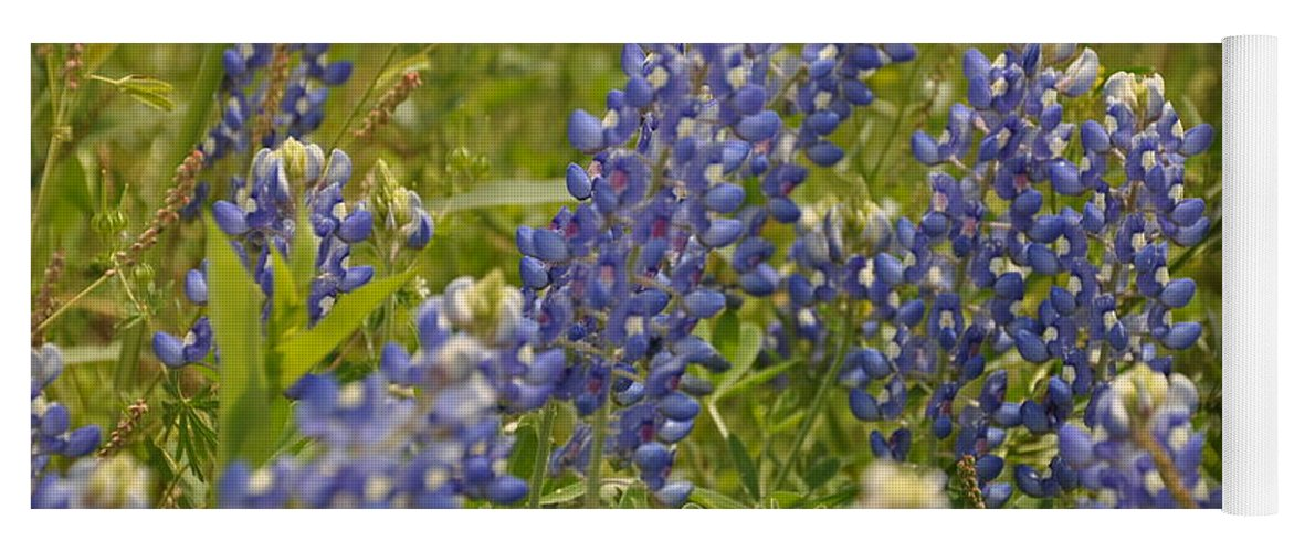 Texas Hill Country Yoga Mat featuring the photograph Texas Bluebonnet by Frank Madia
