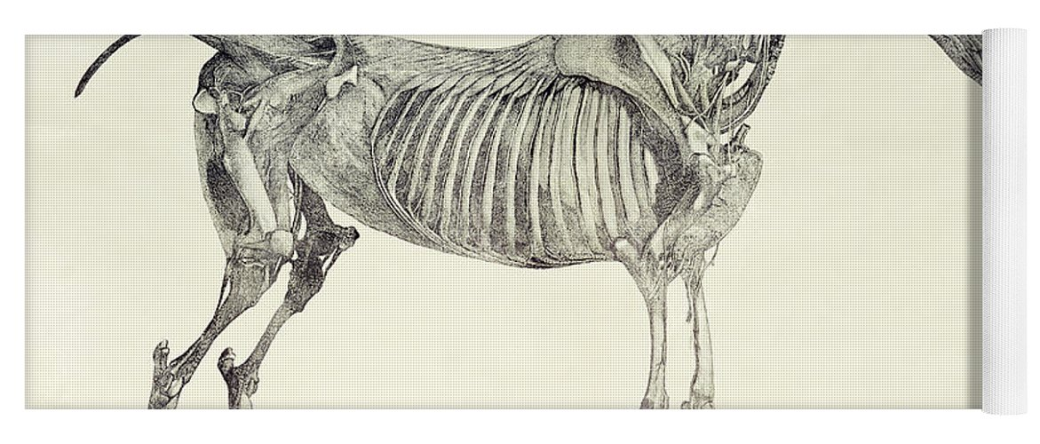The Anatomy Of The Horse Yoga Mat For Sale By George Stubbs