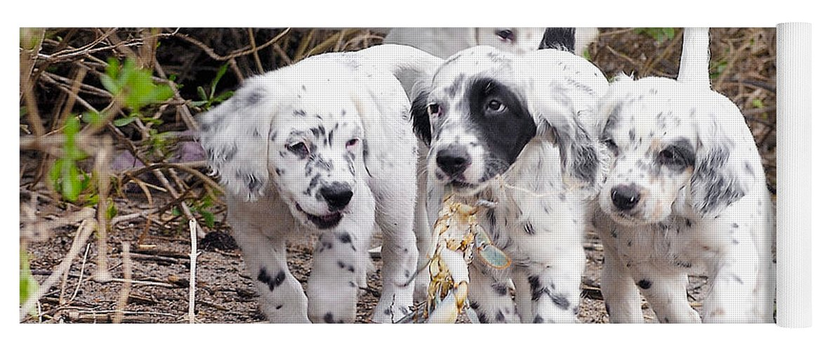 English Setter Yoga Mat featuring the photograph The Puppy's Prize by Scott Hansen