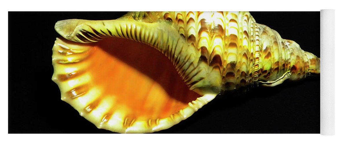 Frank Wilson Yoga Mat featuring the photograph Triton Trumpet Seashell Cymatium Tritonis by Frank Wilson