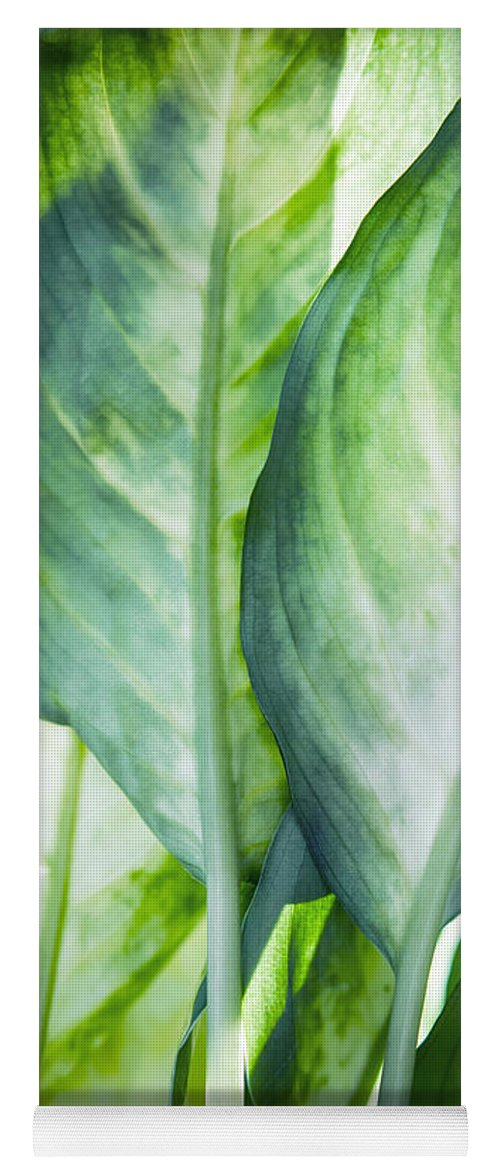 Summer Yoga Mat featuring the painting Tropic Abstract by Mark Ashkenazi