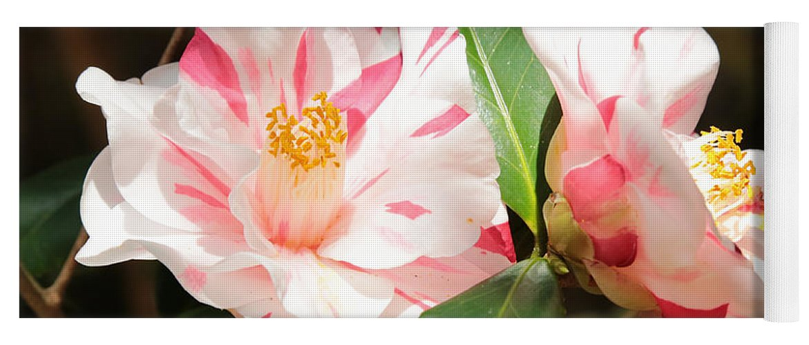 Camellia Yoga Mat featuring the photograph Two Striped Camellias by Carol Groenen