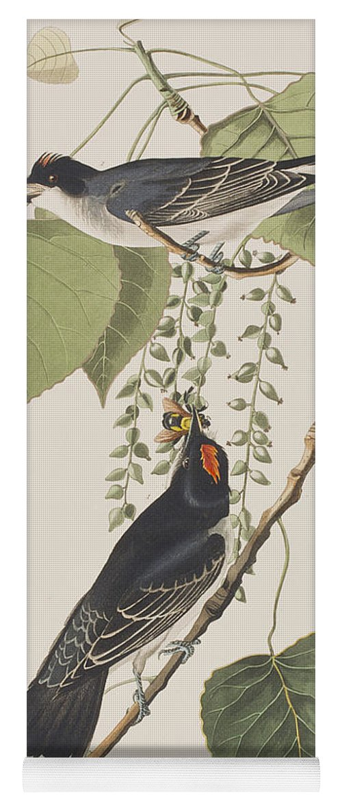 Tyrant Fly Catcher Yoga Mat featuring the painting Tyrant Fly Catcher by John James Audubon