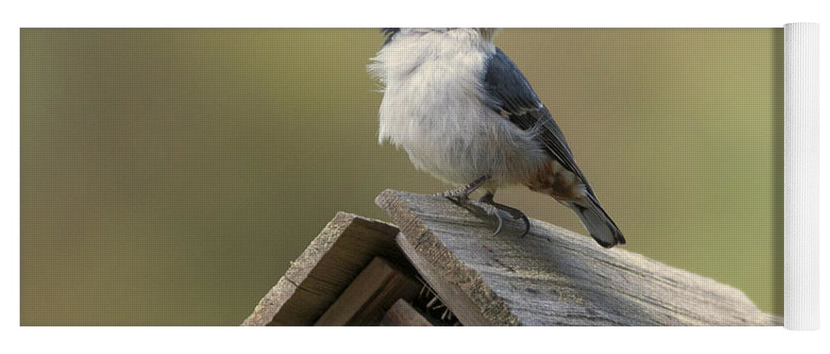 White-breasted Nuthatch Yoga Mat featuring the photograph White-breasted Nuthatch by Mike Dawson