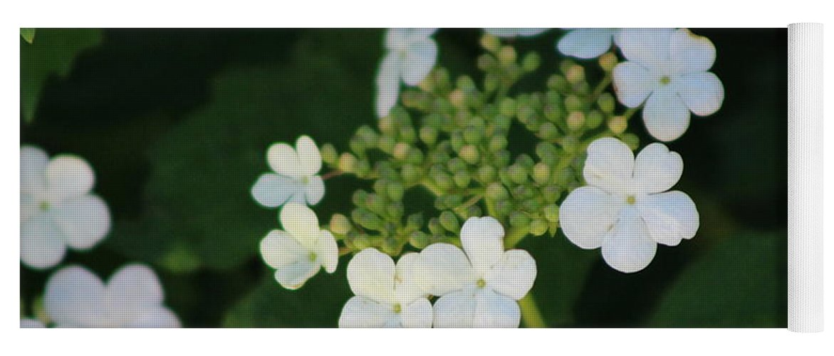 White Bridal Wreath Yoga Mat featuring the photograph White Bridal Wreath Flowers by Colleen Cornelius