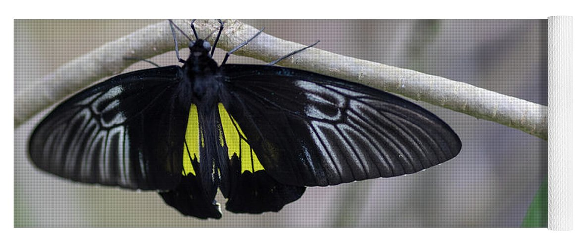 Butterfly Yoga Mat featuring the photograph Yellow And Black Butterfly by Raphael Lopez