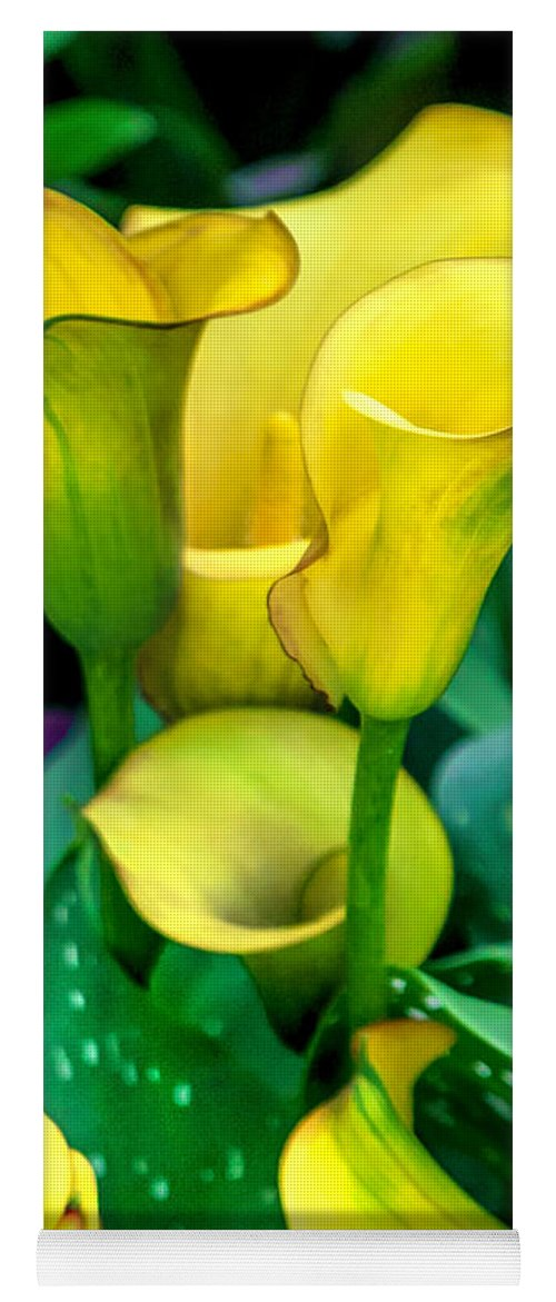 Spring Flowers Yoga Mat featuring the photograph Yellow Calla Lilies by Az Jackson