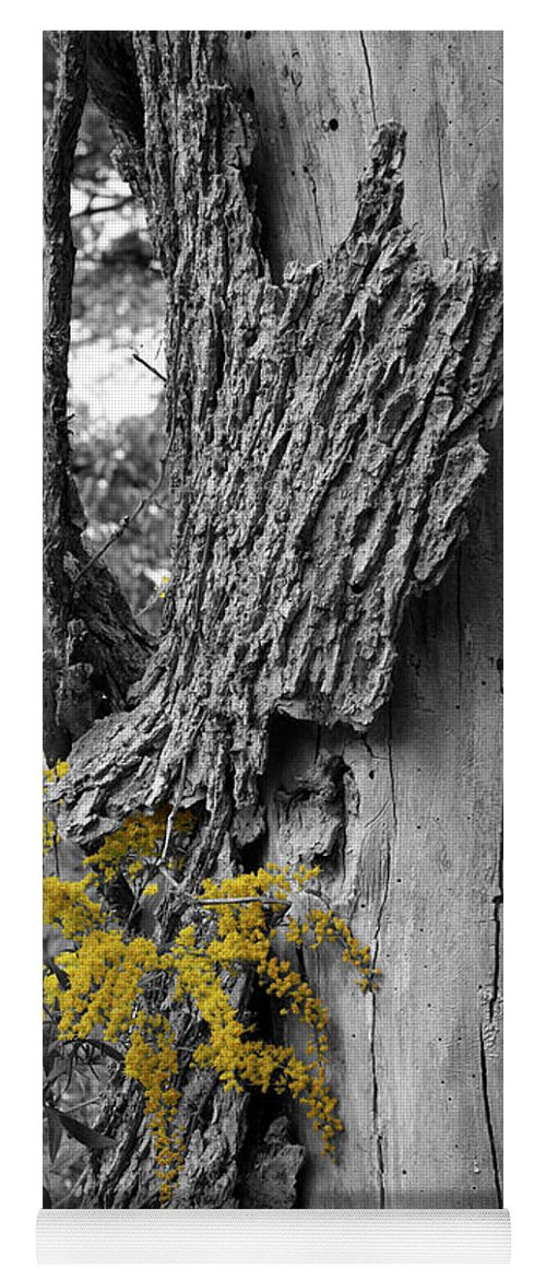 Bark Yoga Mat featuring the photograph Yellow Tufts by Dylan Punke