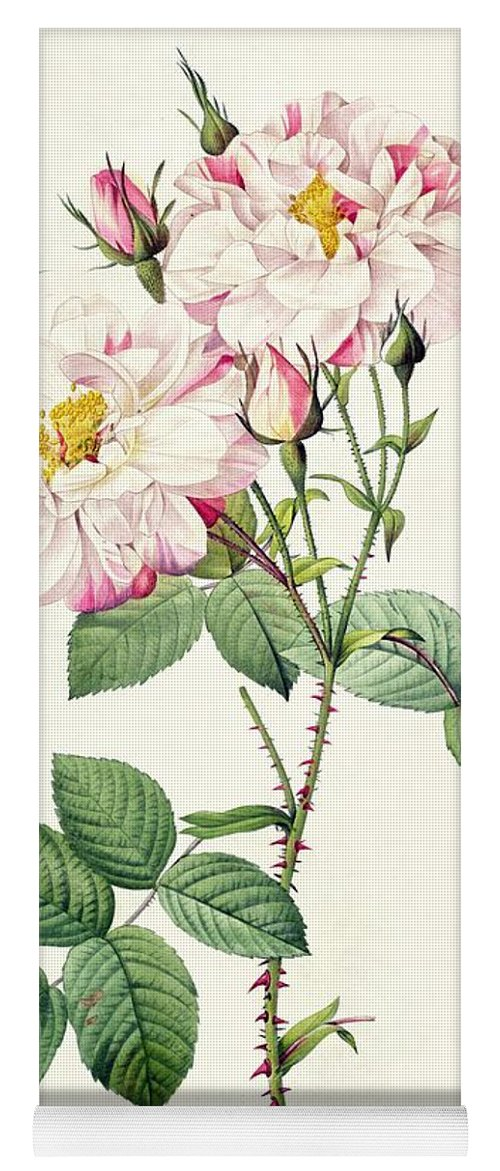 Rosa Yoga Mat featuring the drawing York And Lancaster Rose by Pierre Joseph Redoute