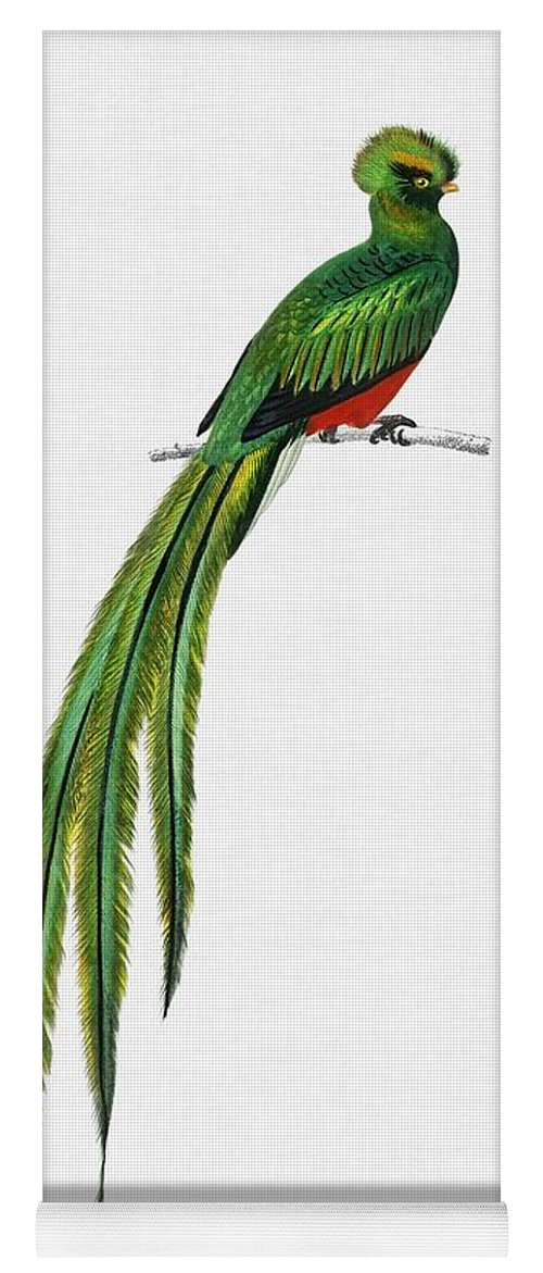Birdwatching Yoga Mat featuring the painting Pavonine Quetzal Pharomachrus Pavoninus Illustrated By Charles Dessalines D Orbigny 1806 1876 3 1 by Celestial Images