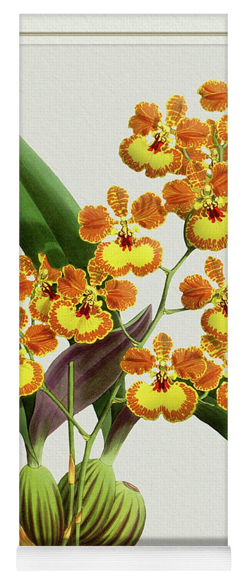 Vintage Yoga Mat featuring the drawing Orchid Vintage Print On Tinted Paperboard by Baptiste Posters