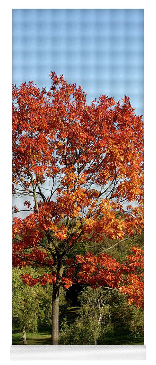 London Yoga Mat featuring the photograph Autumn Colours In Greenwich Park, London by Aidan Moran