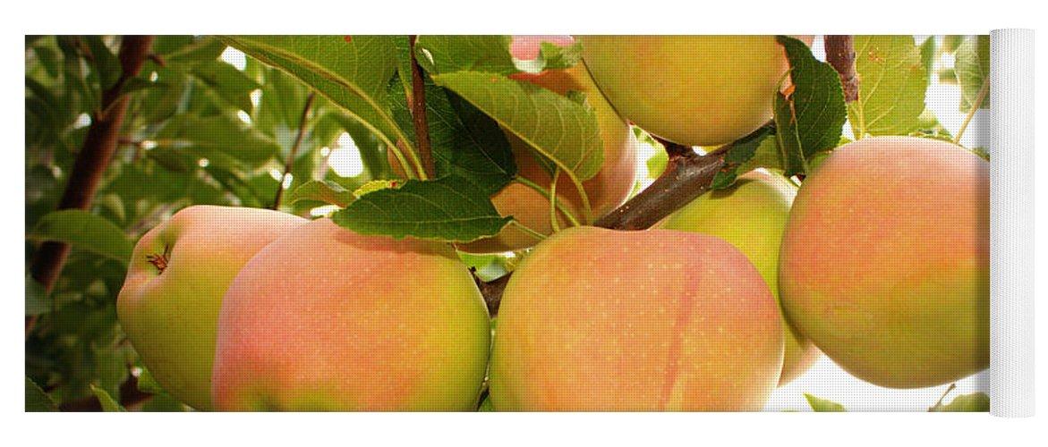 Fruits Yoga Mat featuring the photograph Backyard Garden Series - Apples In Apple Tree by Carol Groenen