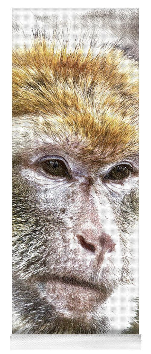 Barbary Ape Yoga Mat featuring the drawing Barbary Ape - Dwp3742926 by Dean Wittle