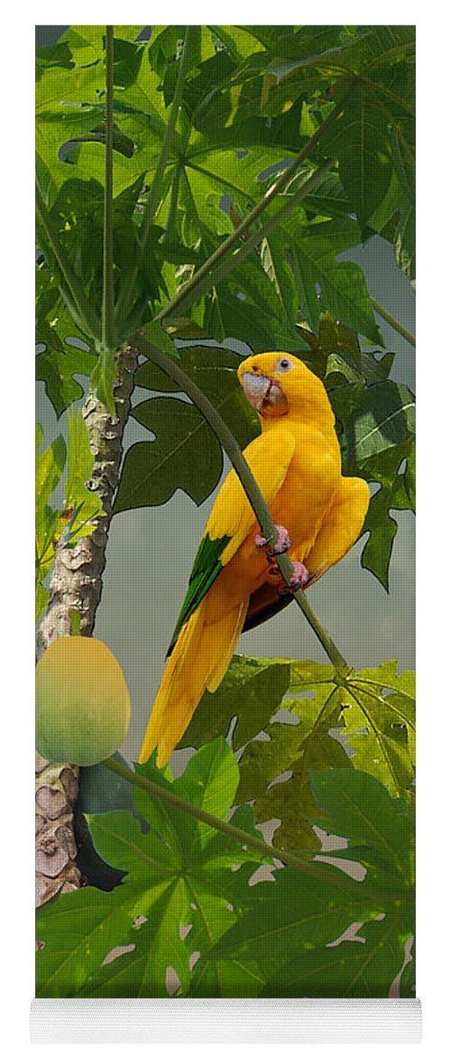 Bird Yoga Mat featuring the digital art Golden Parakeet In Papaya Tree by M Spadecaller