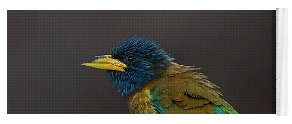 Bird Images For Print Yoga Mat featuring the photograph Great Barbet by Uma Ganesh