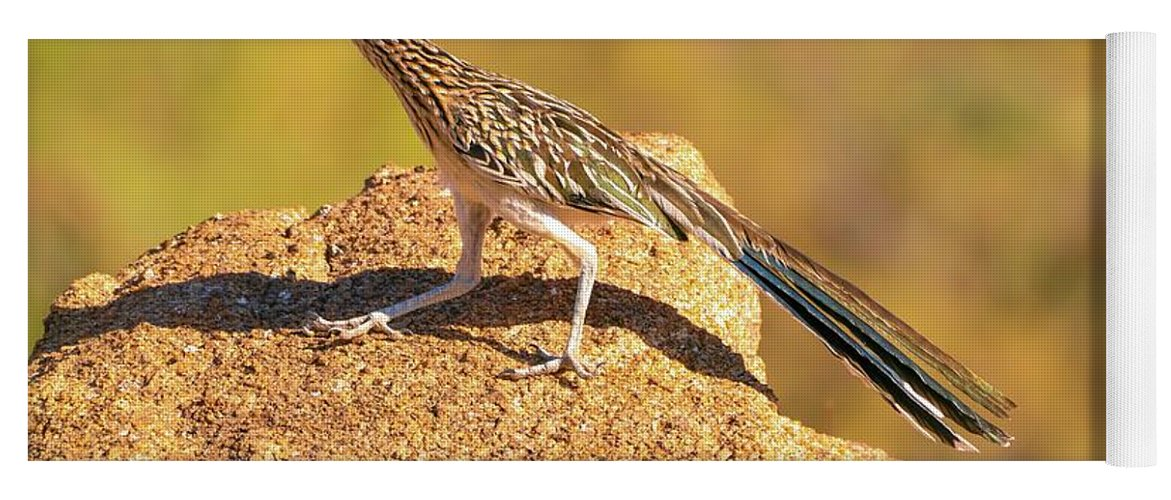 Greater Yoga Mat featuring the photograph Greater Roadrunner by Lynne Russell