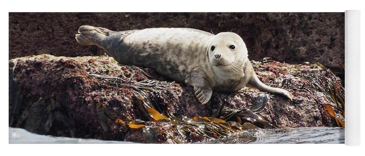 Carnivora Yoga Mat featuring the photograph Harbor Seal - Supporting World Wide Fund For Nature by James Lamb