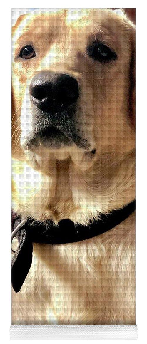 Labrador Dog Yoga Mat featuring the photograph Labrador Dog by Arun Jain