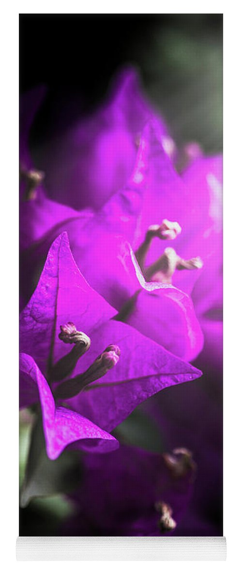 Flower Yoga Mat featuring the photograph Rays Of Bougainvillea by Jorgo Photography - Wall Art Gallery