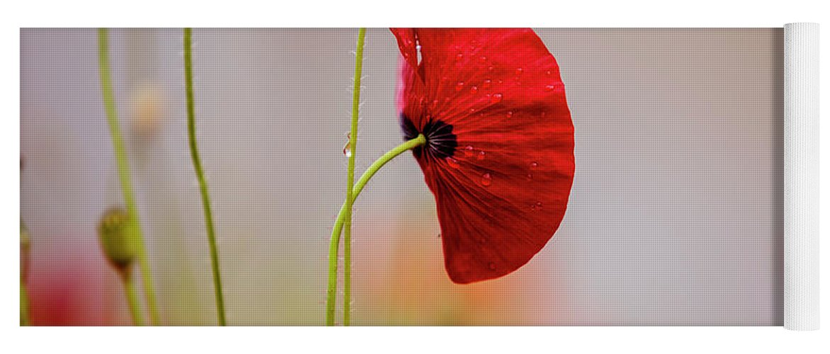 Poppy Yoga Mat featuring the photograph Red Corn Poppy Flowers by Nailia Schwarz
