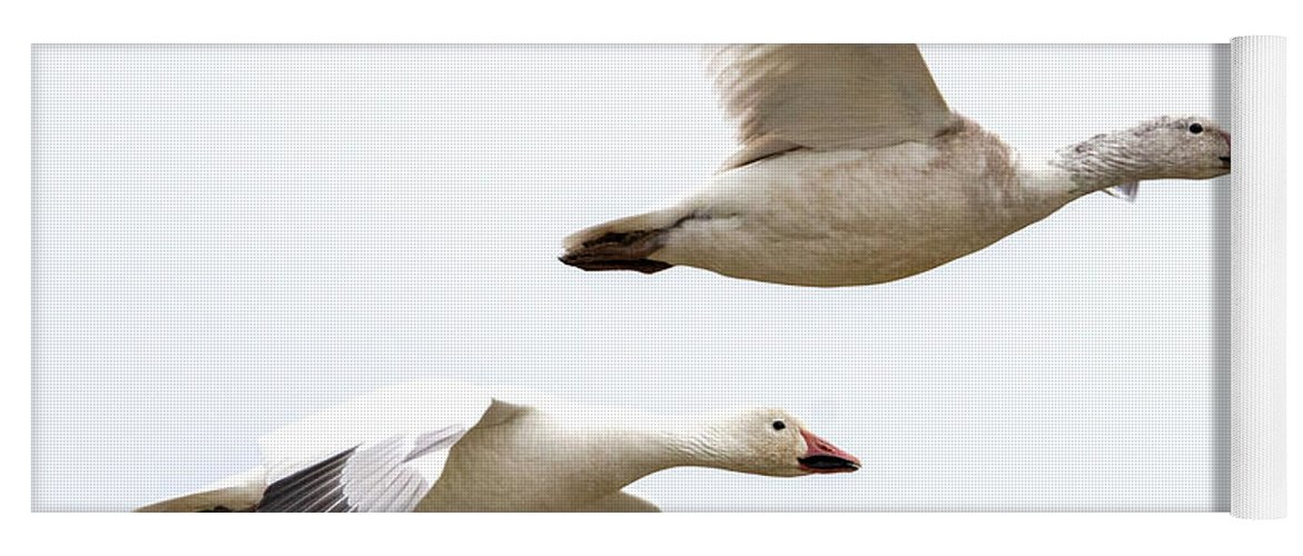 Snow Geese Yoga Mat featuring the photograph Tandem Flight by Mike Dawson
