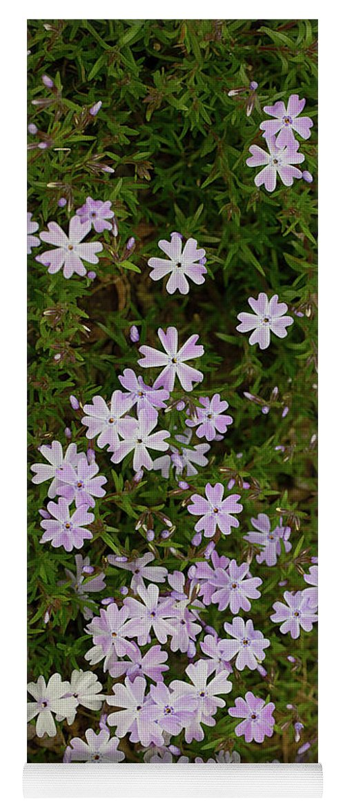 Green Yoga Mat featuring the photograph Tiny Phlox by Emily Johnson