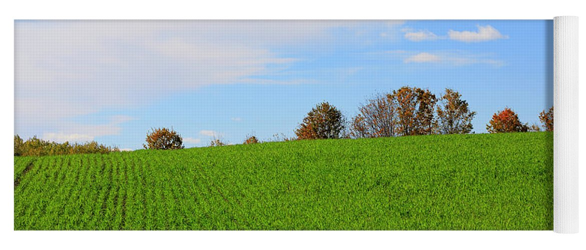 Autumn Yoga Mat featuring the photograph Winter Wheat In October In Southern Ontario by Louise Heusinkveld