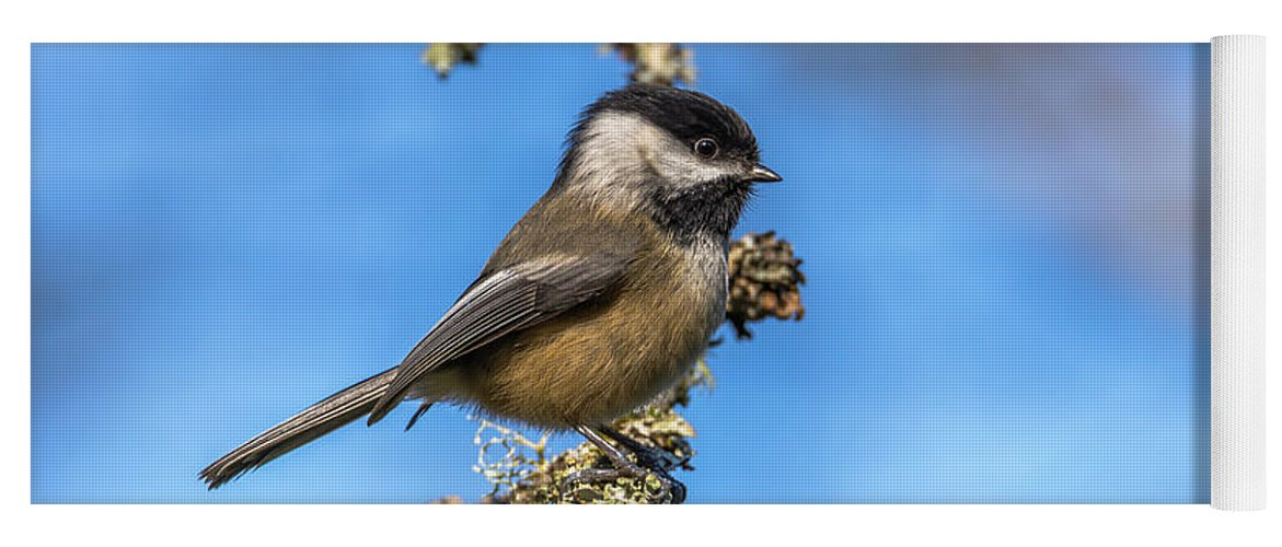 Chickadee Yoga Mat featuring the photograph Chickadee With Blue Background by Marv Vandehey