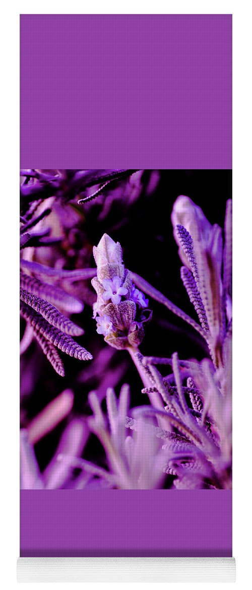 Plants Yoga Mat featuring the photograph French Lavender by Jesse Chaidez