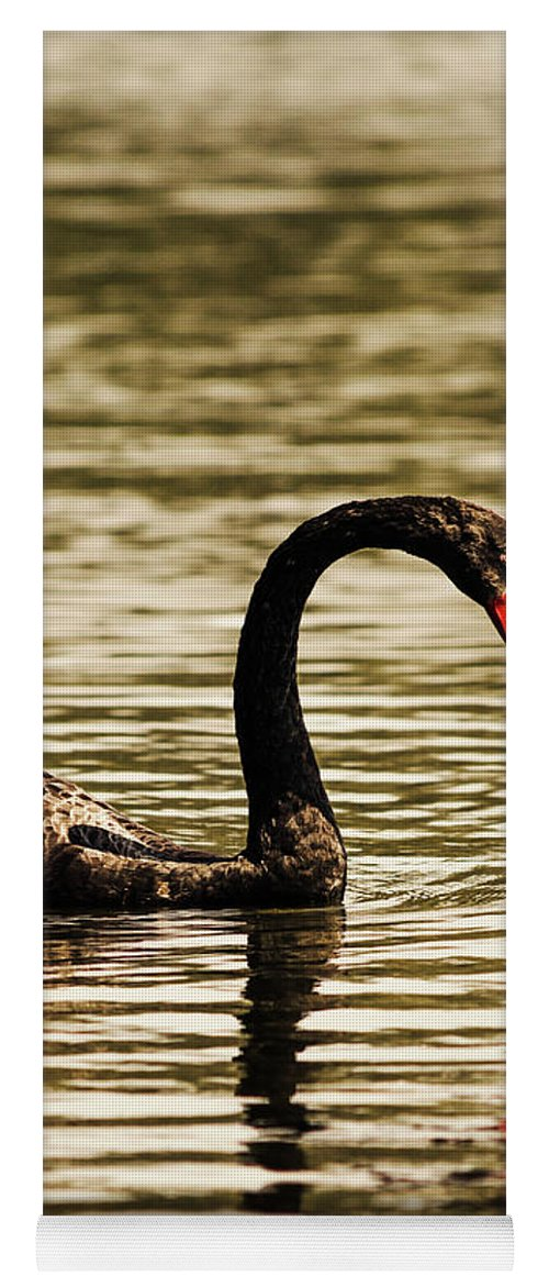Birds Yoga Mat featuring the photograph Graceful Way by Jorgo Photography - Wall Art Gallery