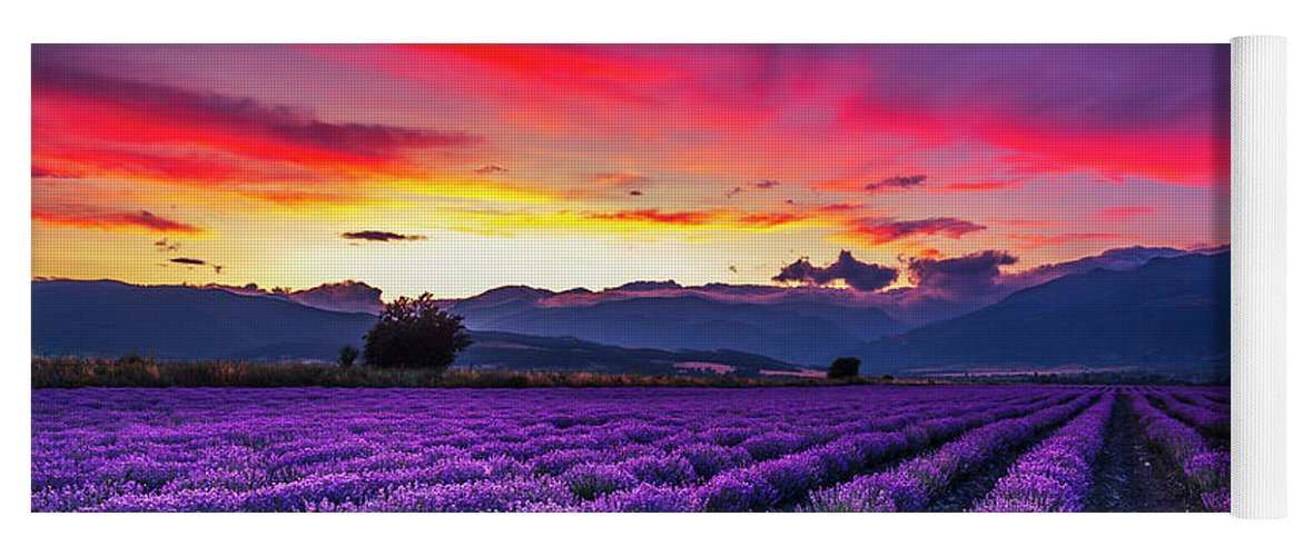 Dusk Yoga Mat featuring the photograph Lavender Season by Evgeni Dinev