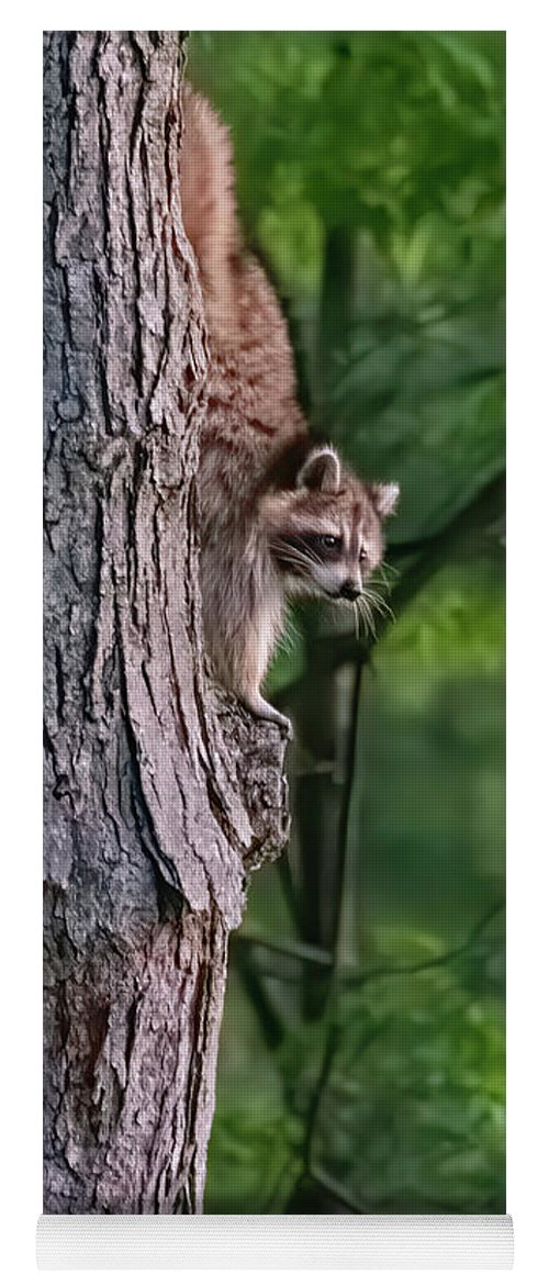 Racoon Yoga Mat featuring the photograph Making a late night snack run by ChelleAnne Paradis