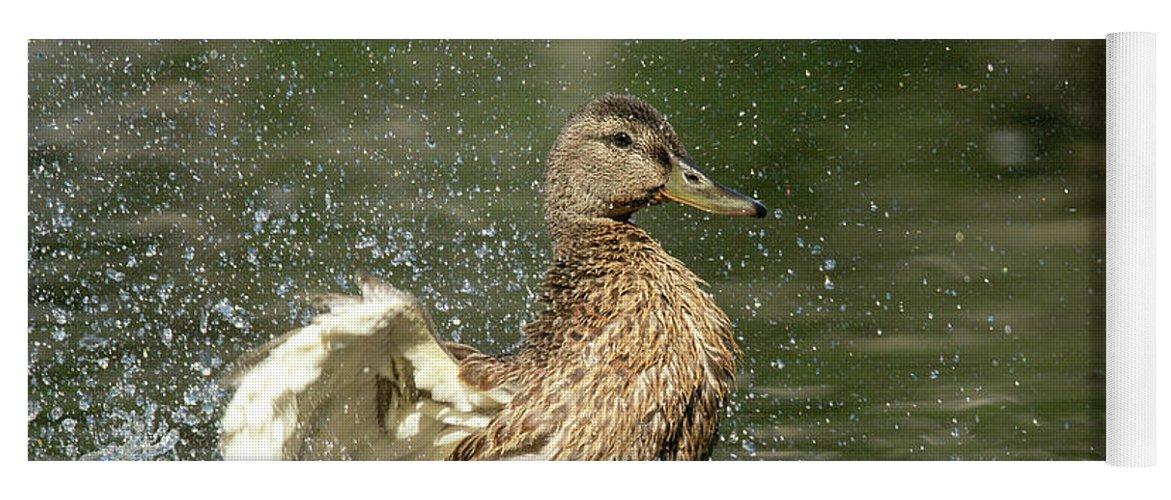 Mallard Yoga Mat featuring the photograph Mallard Hen Duck Splashing in Water by Nikki Vig