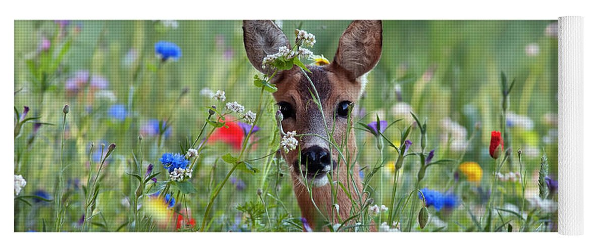 00540443 Yoga Mat featuring the photograph Roe Deer Amid Wildflowers by Ronald Stiefelhagen