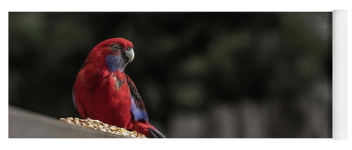 Rosella Yoga Mat featuring the photograph Rosella 1 by Leigh Henningham