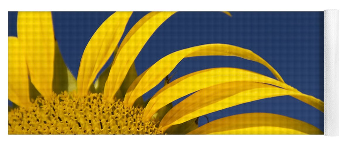 3scape Yoga Mat featuring the photograph Sunflower by Adam Romanowicz