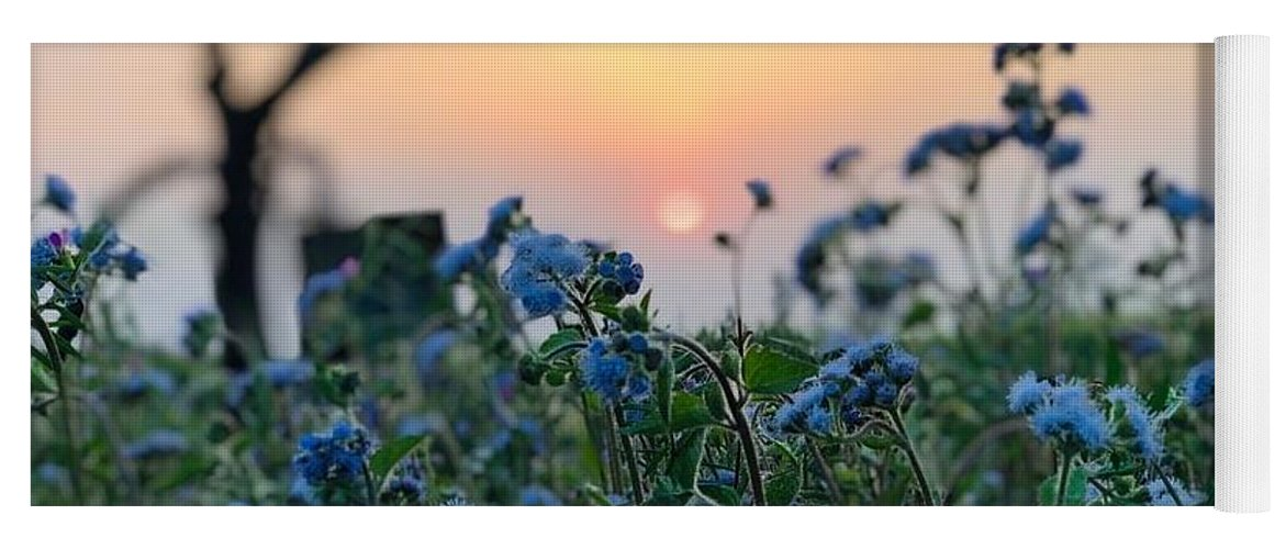 Flowers Yoga Mat featuring the photograph Sunset Behind Flowers by Prashant Dalal