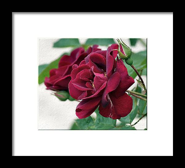 Red Flowers Framed Print featuring the photograph Beautiful Red Roses by Luv Photography