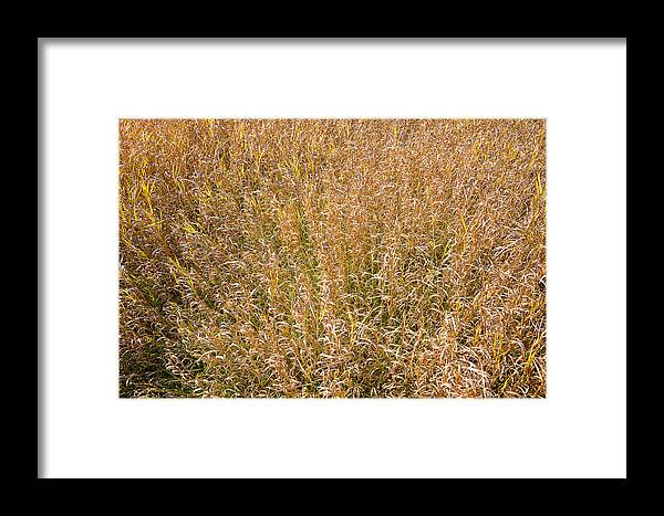 Background Framed Print featuring the photograph Brown Grass Texture by Donald Erickson