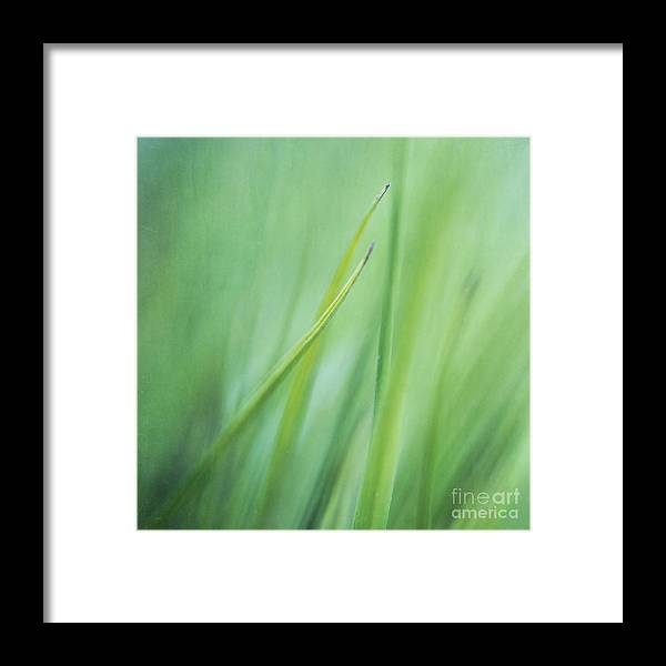 Grass Framed Print featuring the photograph Feathery by Priska Wettstein