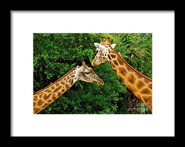 Giraffe's Framed Print featuring the photograph Giraffe's At Lowery Park Zoo by Debra Haworth
