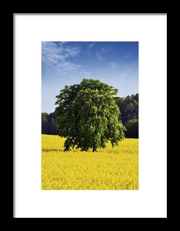 Rape Framed Print featuring the photograph Rapeseed Field by Aged Pixel