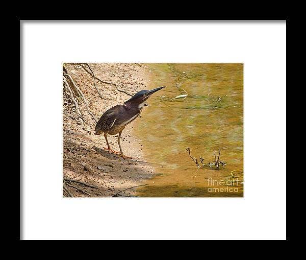 Bird Framed Print featuring the photograph Shady Spot by Donna Brown