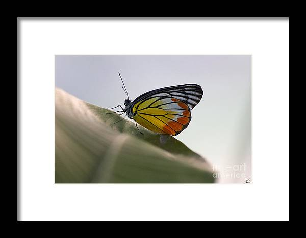 Thailand Framed Print featuring the photograph Thai Beauty On A Leaf by Nola Lee Kelsey